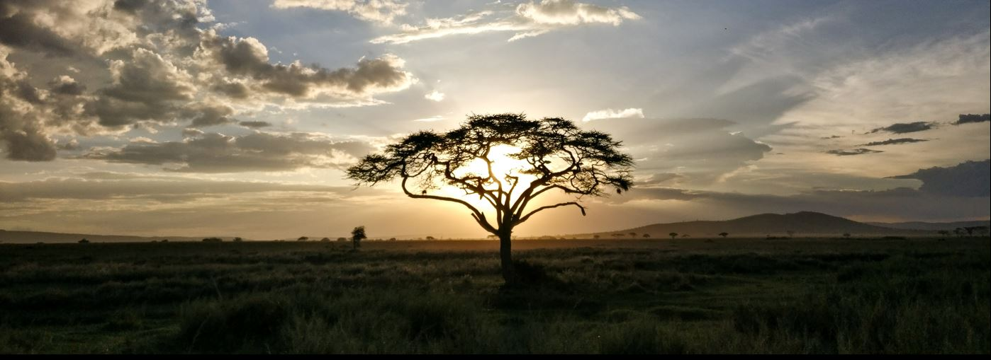 Picture of a sunset in Africa.